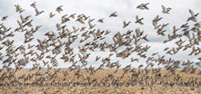 Devil's Lake - North Dakota - Waterfowl Hunting - Duck Hunts