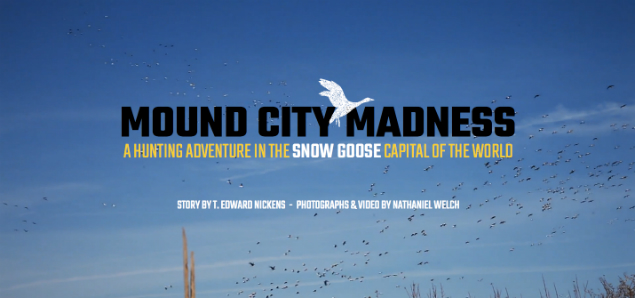 Mound City Madness - Snow Goose Hunting - Goose Hunting