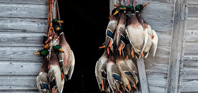 Oklahoma - Duck - hunts