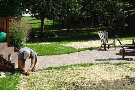 Lawn Restoration Services